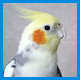 Для попугаев