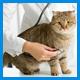 Лечение и профилактика заболеваний желудочно-кишечного тракта