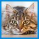 Противомикробные препараты для кошек