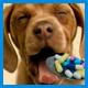 Препараты для иммунной системы собак