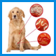 Антигельминтные средства для собак