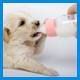 Заменитель молока для собак